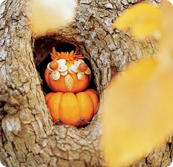 ms owl pumpkin