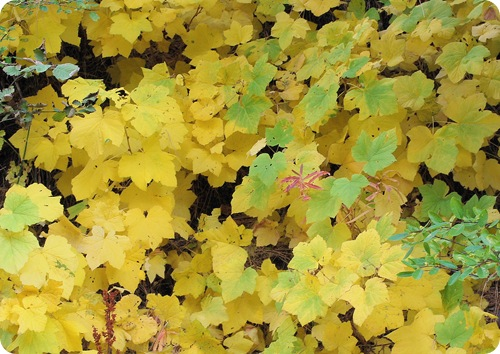 forest leaves in yellow