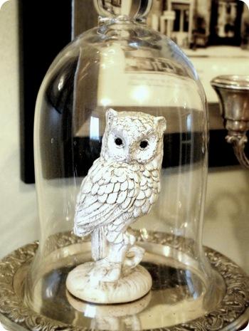 cg owl
