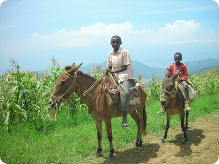 haitian boy on horses