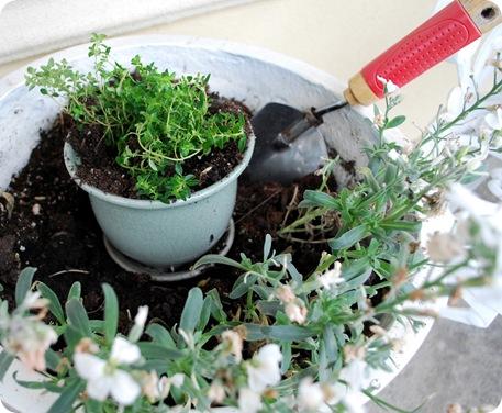 rob soil