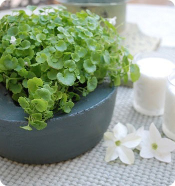 cg teal planter