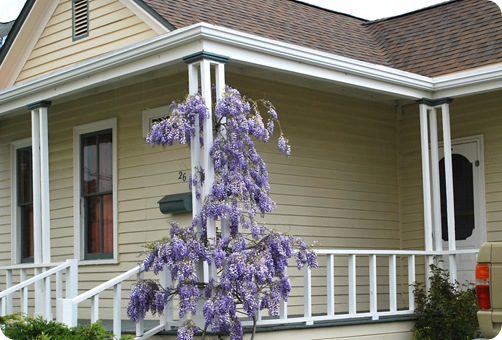 wisteria and porch post