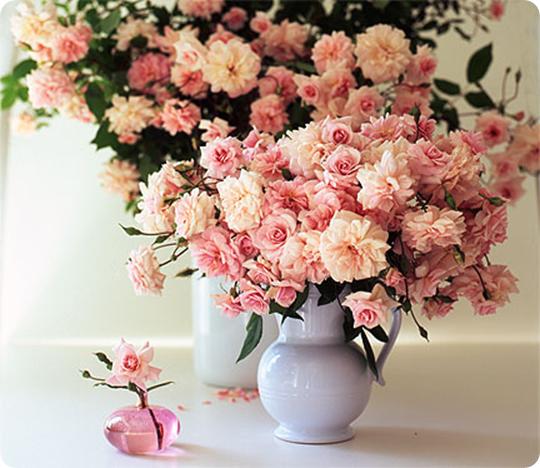 Simple Pleasures Climbing Roses Centsational Girl