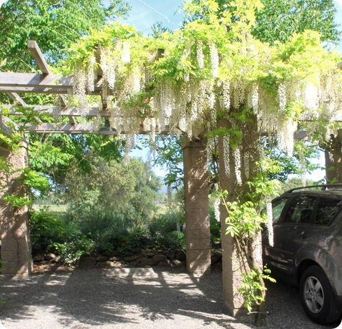 park under wisteria