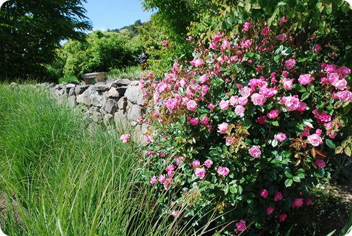 roses and rock wall