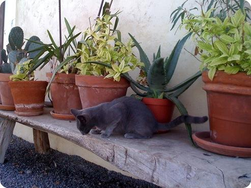 kitty on bench