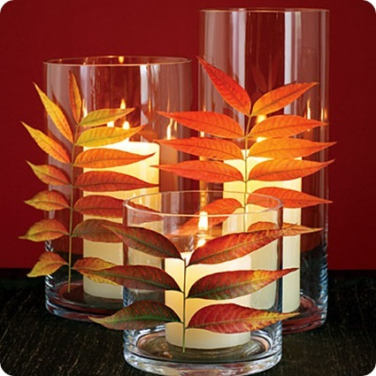 chinease pistache leaves on glass sunset
