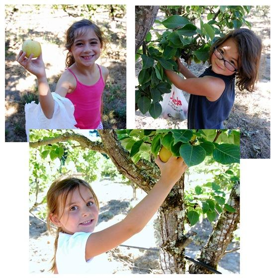 girls picking apples