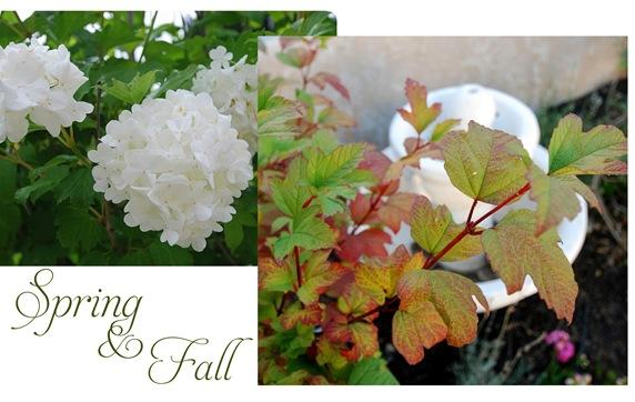 viburnum spring and fall