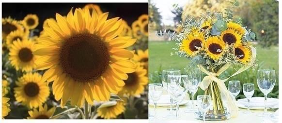 sunflowers duo