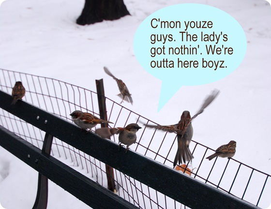 were outta here birds