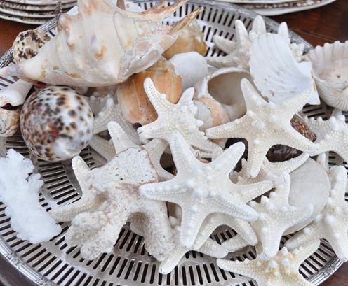 starfish on tray