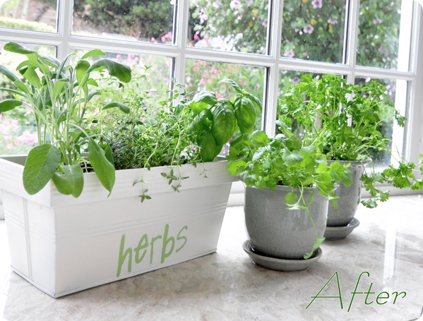 herb planter after