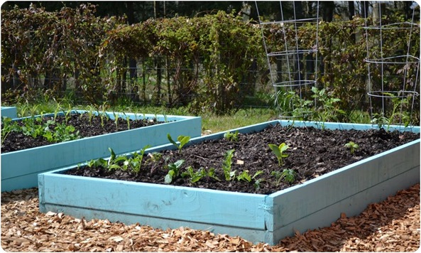 painted raised planting beds