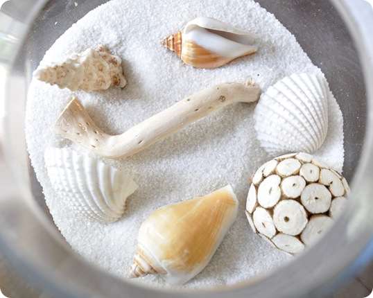 shells in white sand