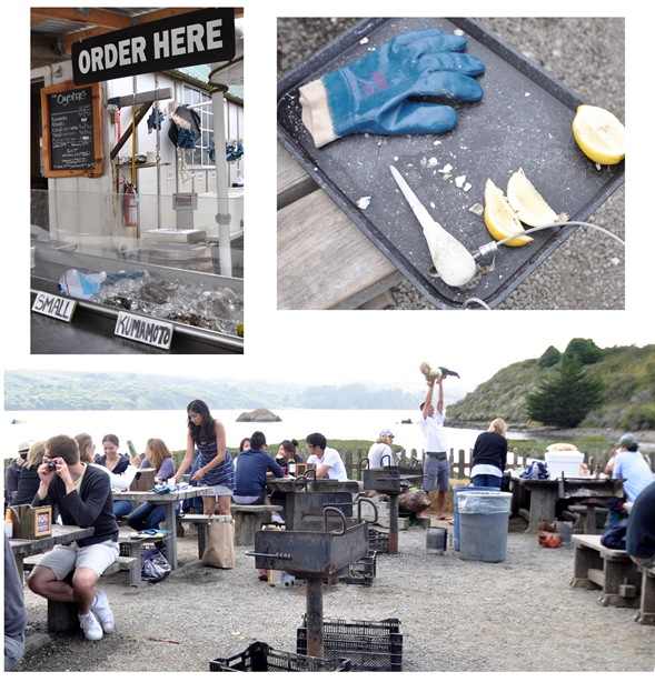 hog island collage