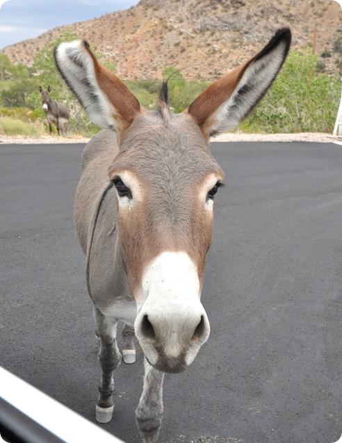 burros approaching