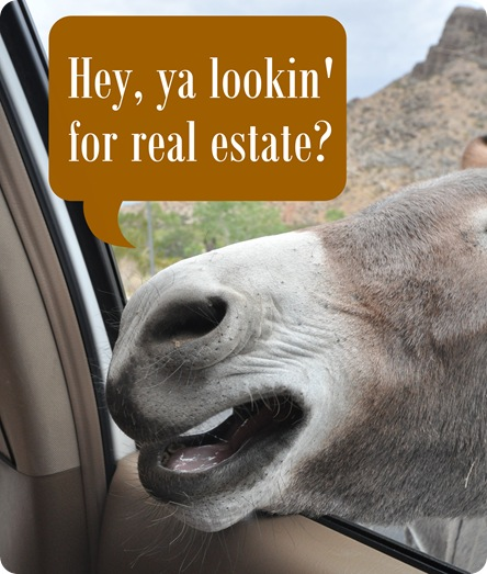 looking for real estate