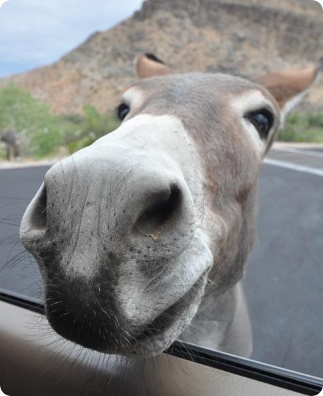 nose in car