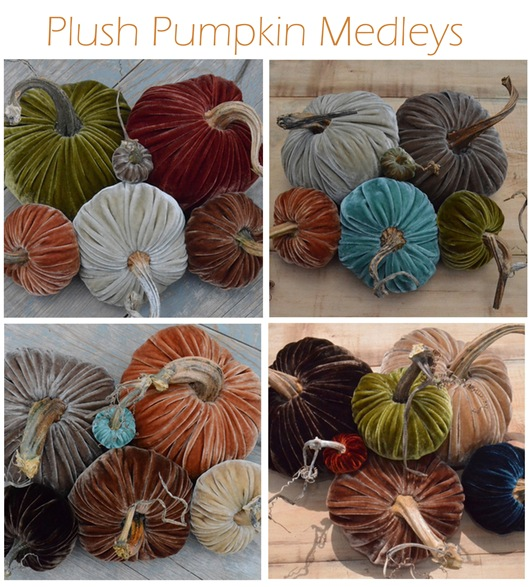 plush pumpkin medleys
