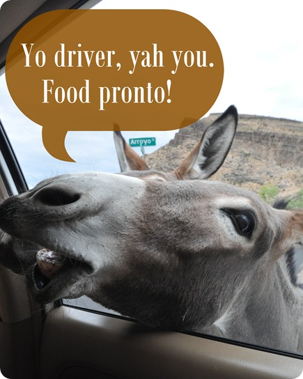 yo driver