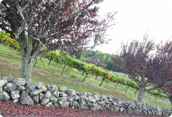 rock wall and vineyard healdburg