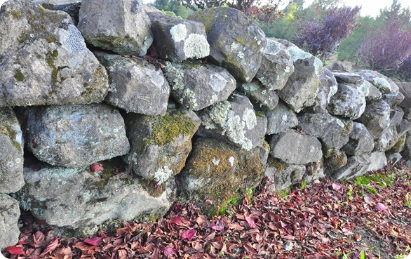 rock wall fallen leaves