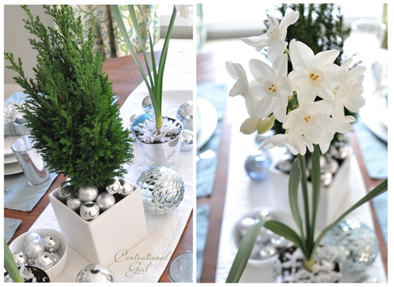 evergreen tree and paperwhites