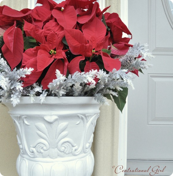 red poinsettias in urn cg