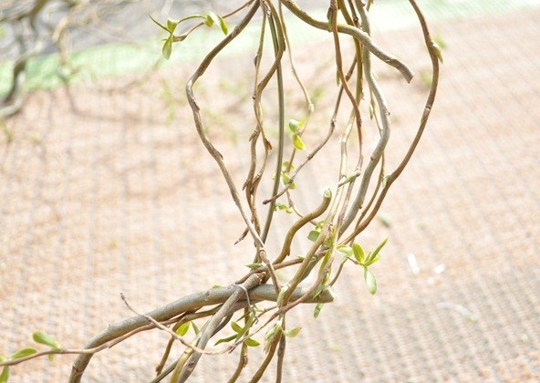 weave branches