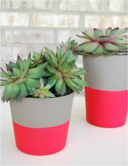neon pot the proper pinwheel blog