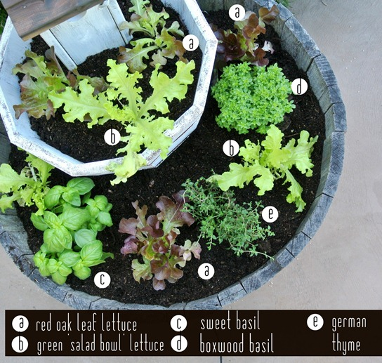 salad and herb labels