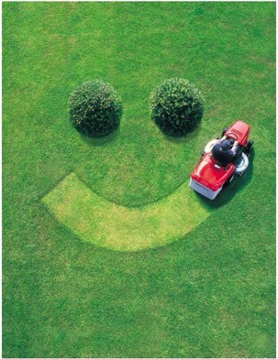 cut lawn