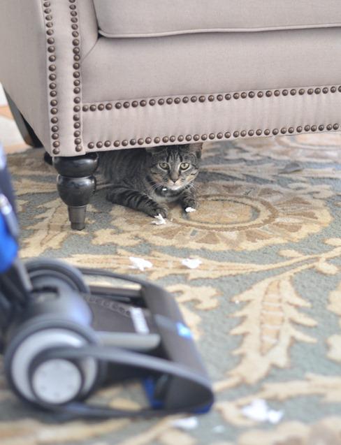 guilty cat 2