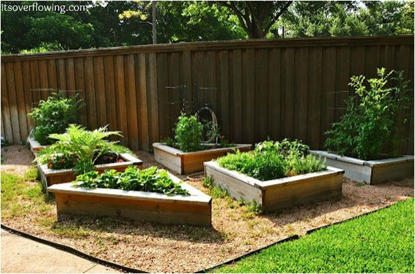 raised vegetable garden itsoverflowing