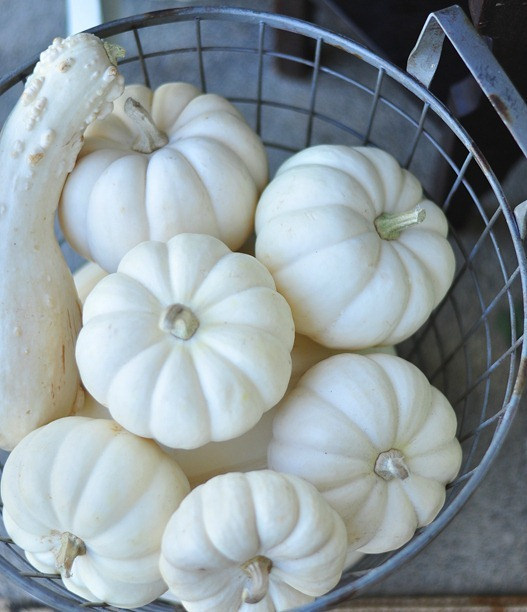 pumpkins in basket no blemishes