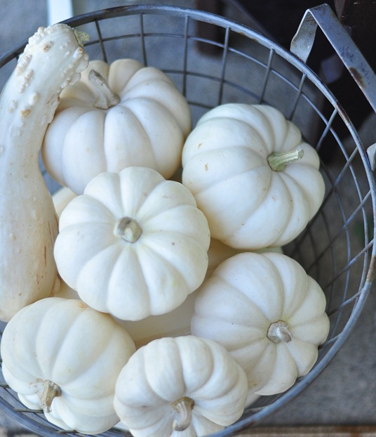 pumpkins in basket