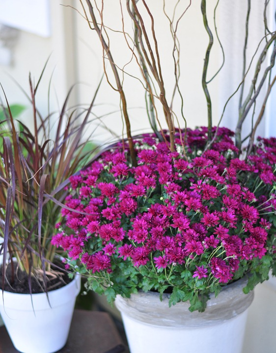 purple mums and willow branches