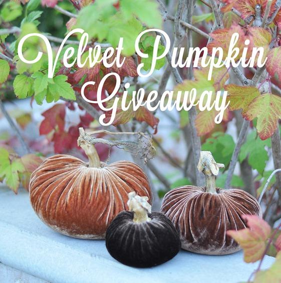 velvet pumpkin giveaway