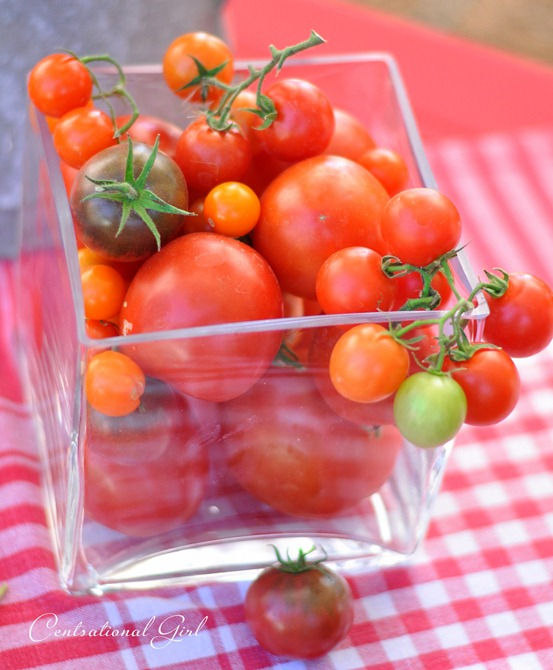 vine tomatoes in glass vase cg