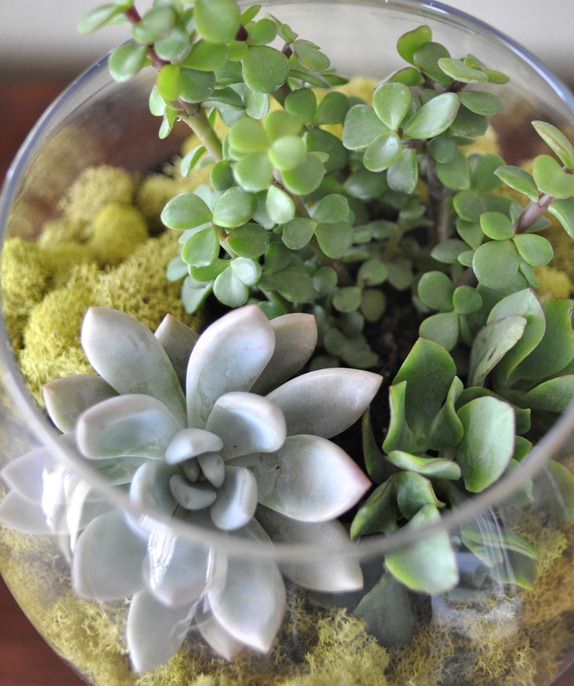 succulents in apothecary jar