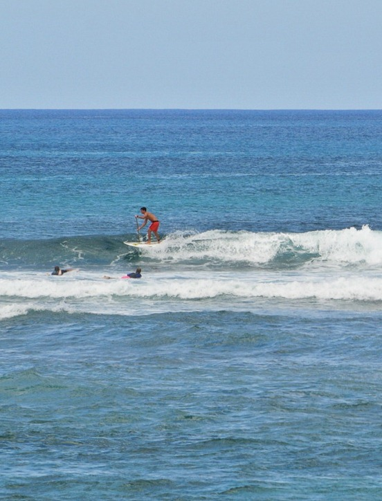 haleiwa surfer