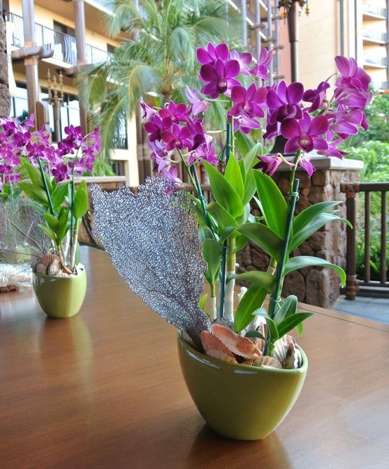 aulani orchids
