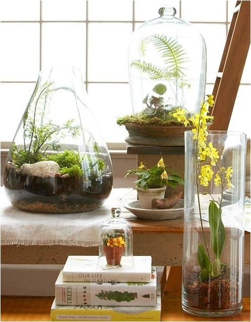 terrarium for mom