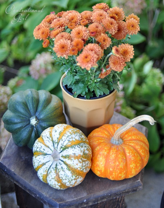 trio of mini pumpkins