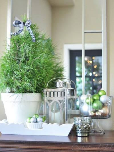 pine-tree-in-white-pot.jpg