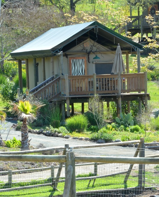 safari west cabin
