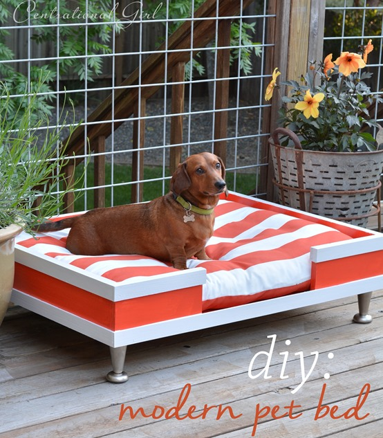Modern Dog Pallet bed