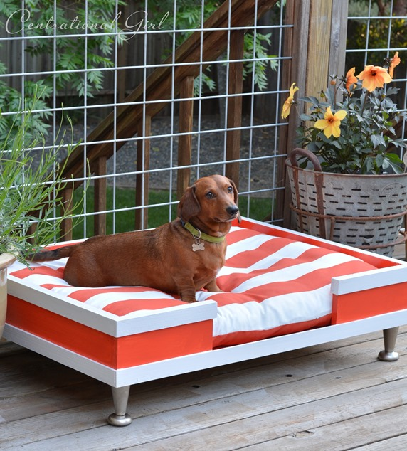 modern dog bed diy